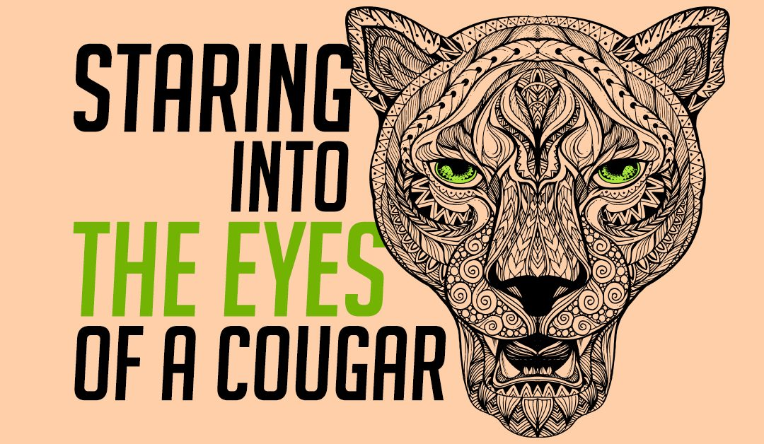 Staring Into the Eyes of a Cougar